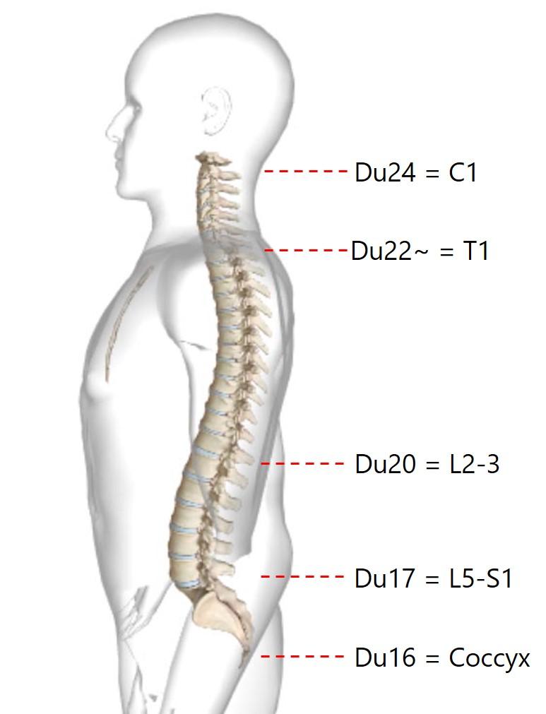 הדמיה של עמוד השדרה לקרקפת